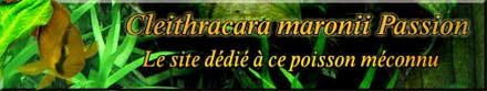 Cleithracara maronii Passion : le site dédié à ce poisson méconnu